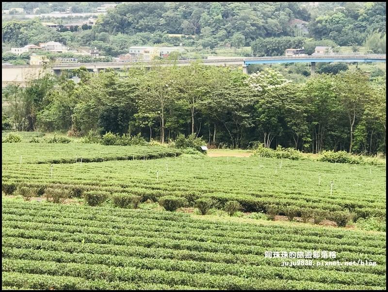 銅鑼茶廠38.JPG