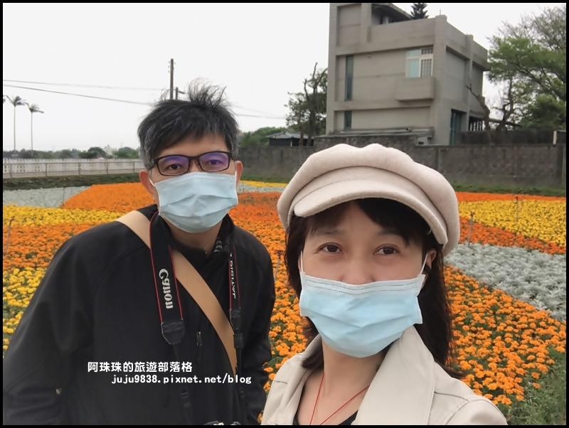 桃園彩色海芋季32.JPG