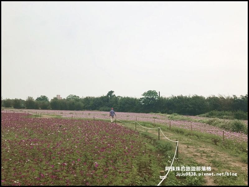 桃園彩色海芋季31.JPG