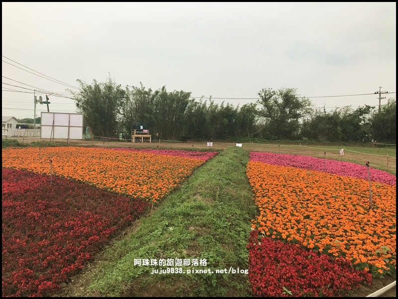桃園彩色海芋季33.JPG
