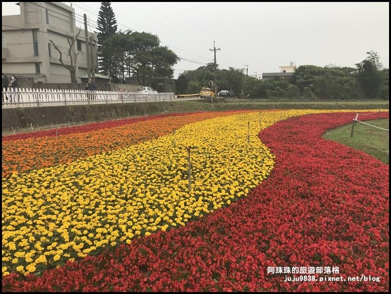 桃園彩色海芋季20.JPG