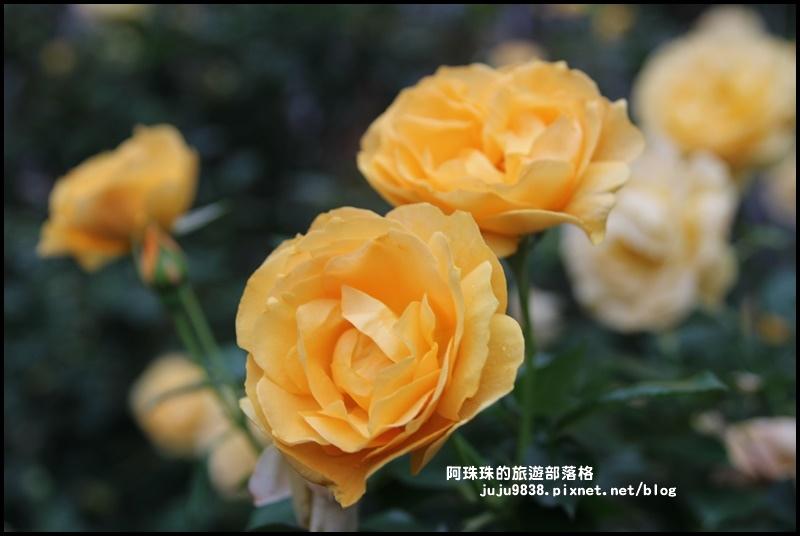 雅聞七里香玫瑰森林19.JPG
