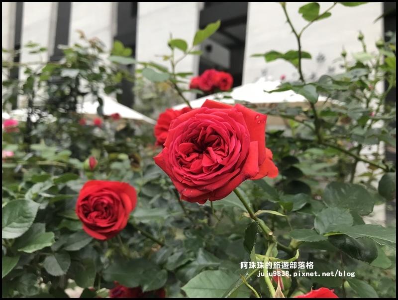 雅聞七里香玫瑰森林39.JPG