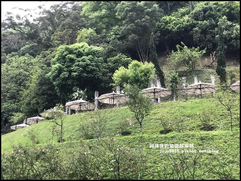 雅聞七里香玫瑰森林42.JPG