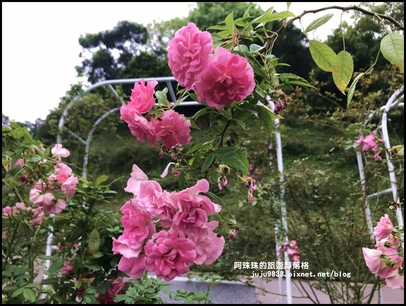 雅聞七里香玫瑰森林33.JPG