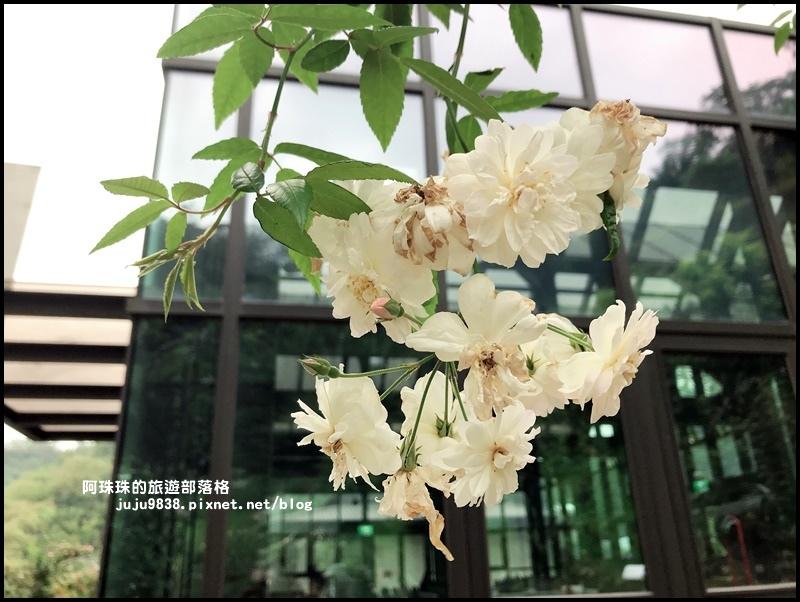 雅聞七里香玫瑰森林38.JPG