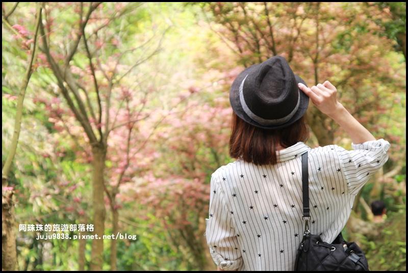 台北奧萬大28.JPG