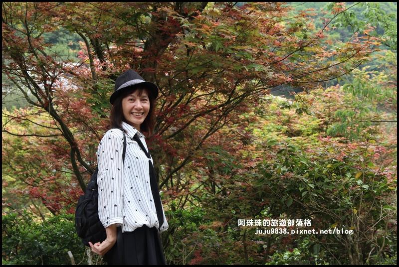 台北奧萬大16.JPG