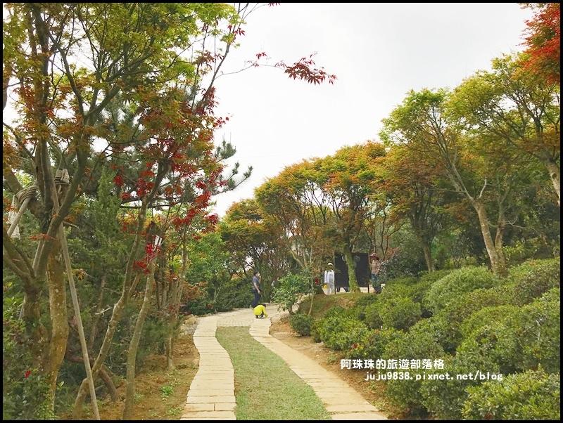 台北奧萬大50.JPG
