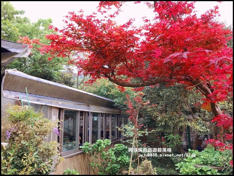 竹子湖海芋季63.JPG