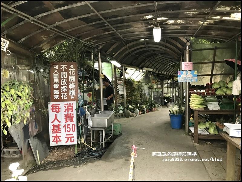 竹子湖海芋季64.JPG