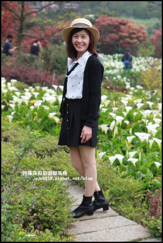 竹子湖海芋季7.JPG