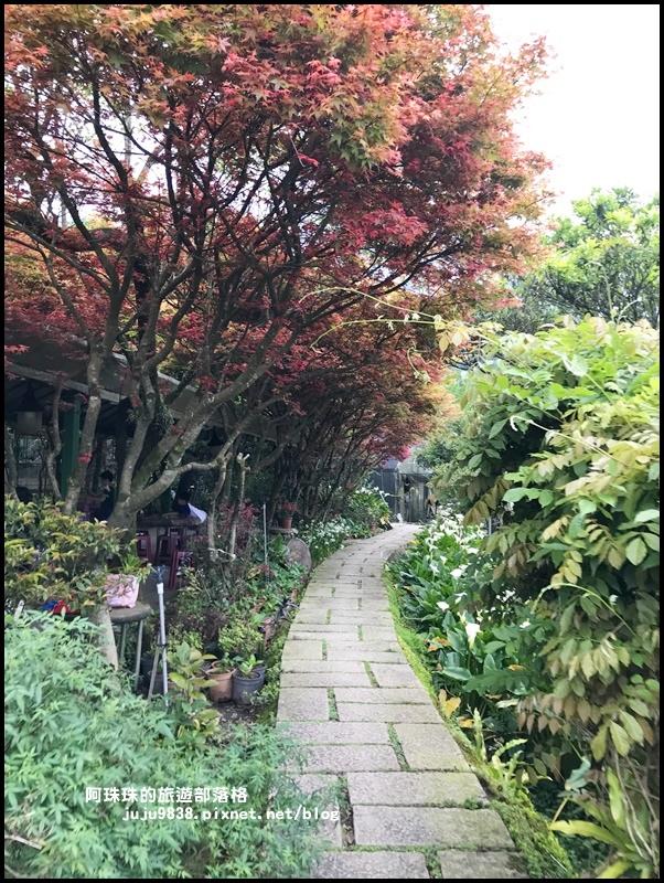 竹子湖海芋季49.JPG