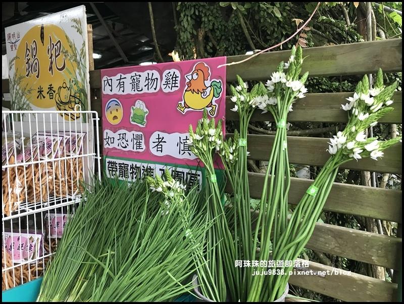 竹子湖海芋季37.JPG