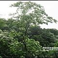 熊空茶園71.JPG