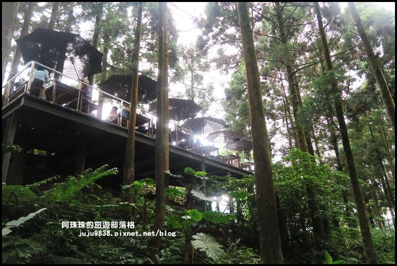 熊空茶園65.JPG