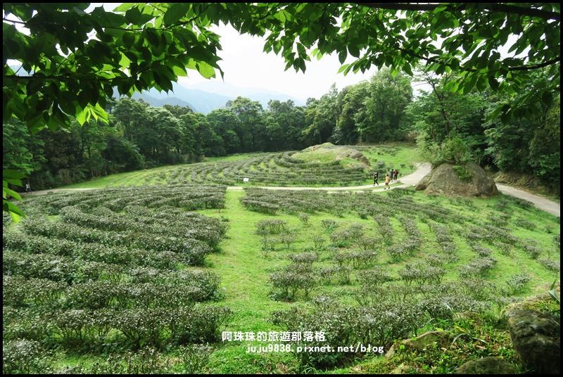 熊空茶園63.JPG