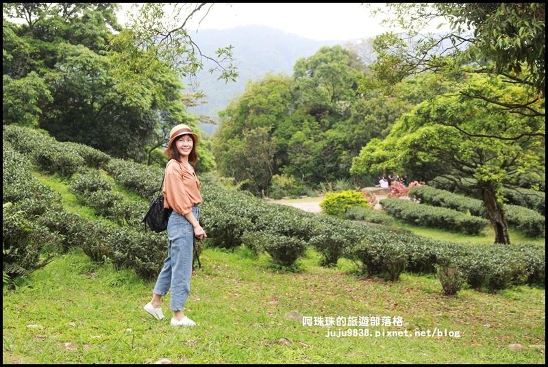 熊空茶園7.JPG