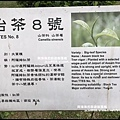 熊空茶園78.JPG