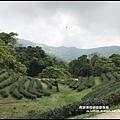 熊空茶園76.JPG