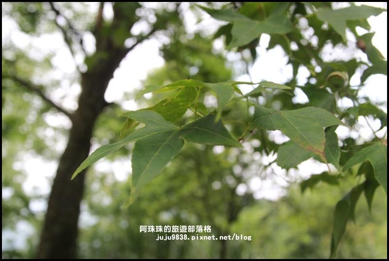 熊空茶園3.JPG