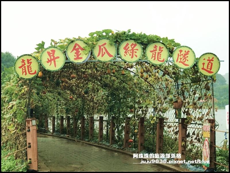 造橋南瓜隧道33.JPG