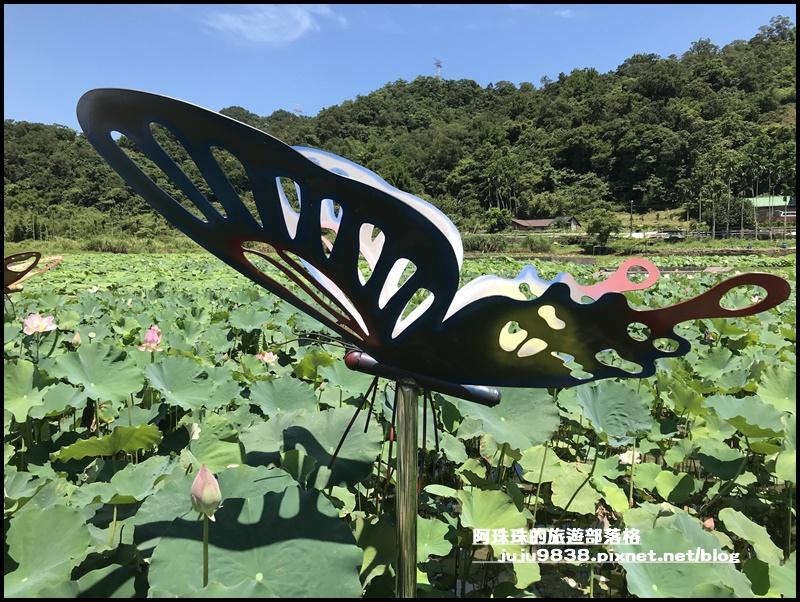 雙溪荷花園22.JPG