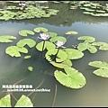 雙溪荷花園16.JPG