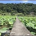 雙溪荷花園8.JPG