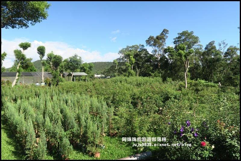 雅聞香草植物園66.JPG