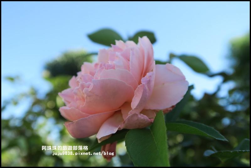雅聞香草植物園64.JPG