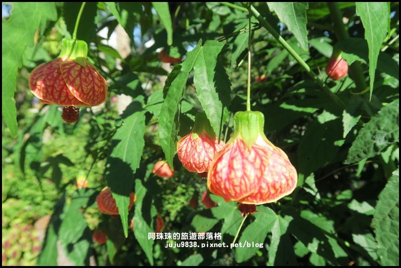 雅聞香草植物園63.JPG