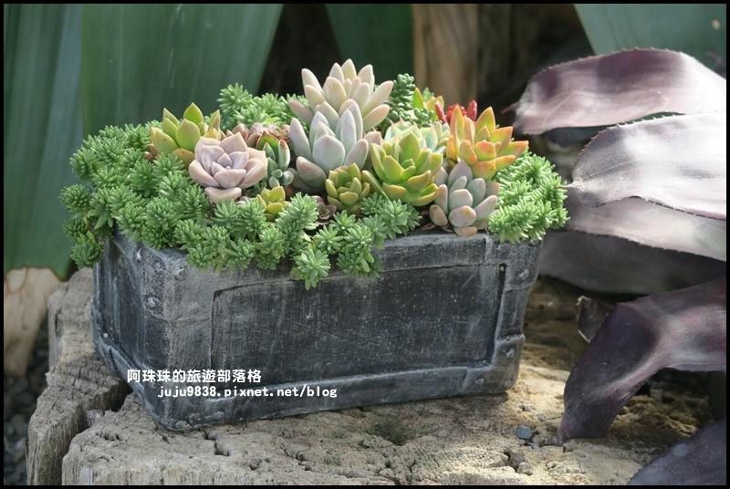 雅聞香草植物園52.JPG