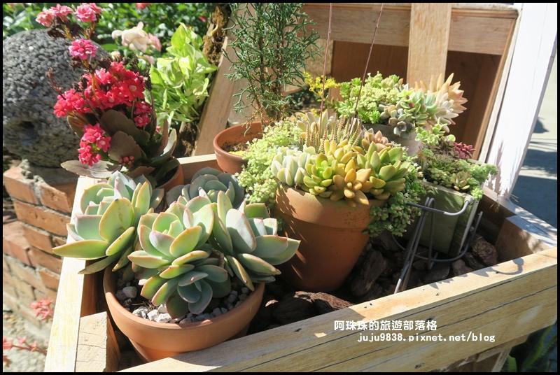 雅聞香草植物園46.JPG