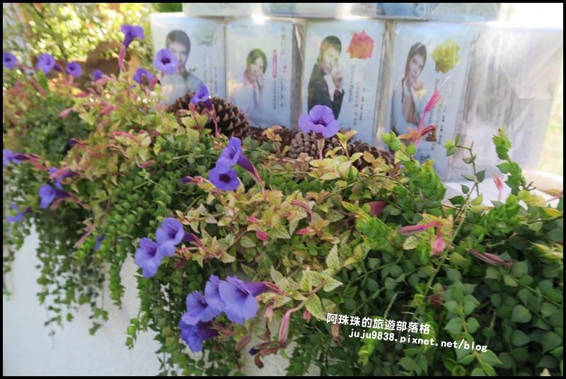 雅聞香草植物園45.JPG