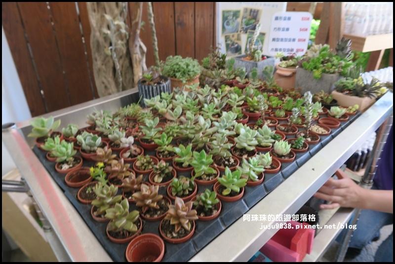 雅聞香草植物園42.JPG