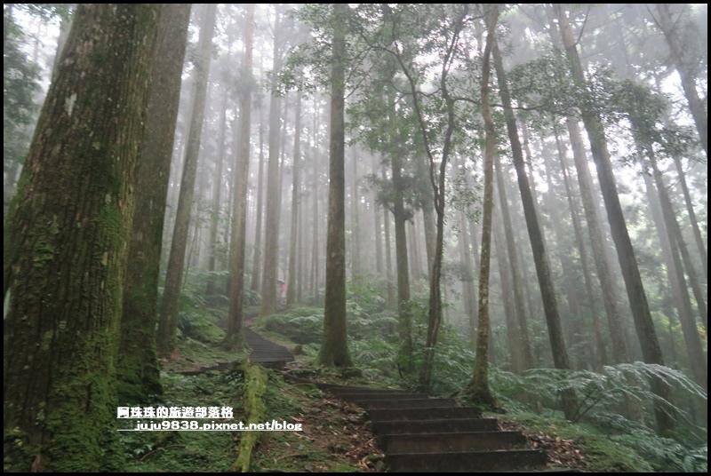 東眼山44.JPG