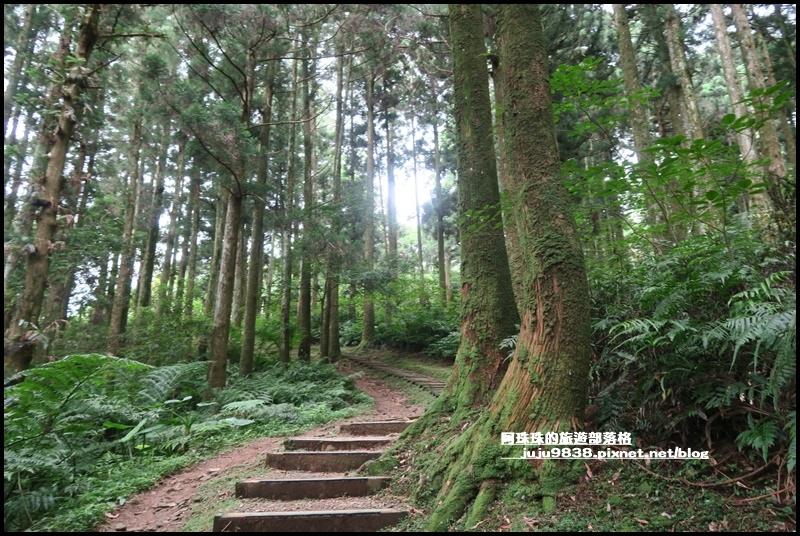 東眼山32.JPG