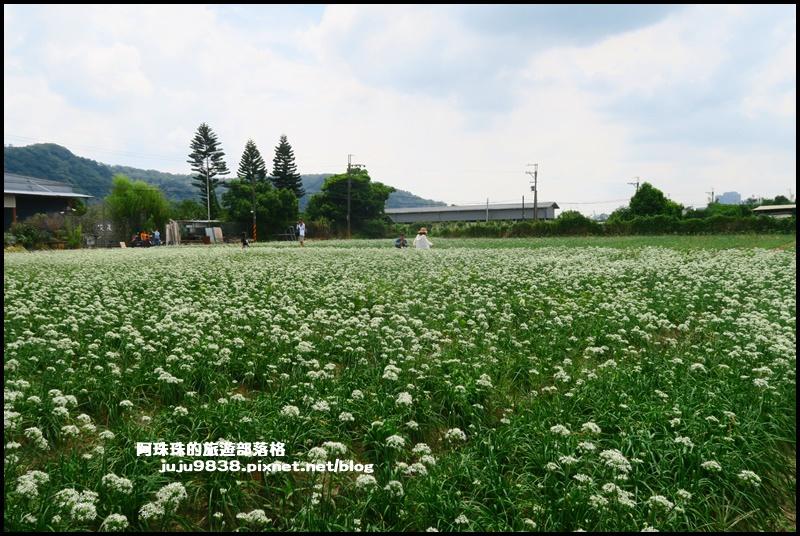 大溪韭菜38.JPG