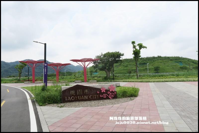 大溪韭菜50.JPG