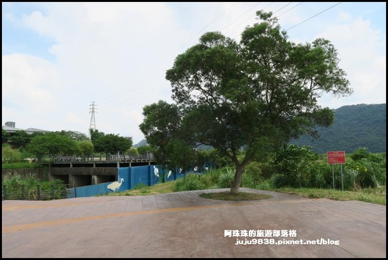 大溪韭菜48.JPG