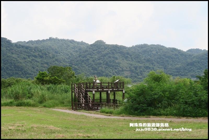 大溪韭菜49.JPG