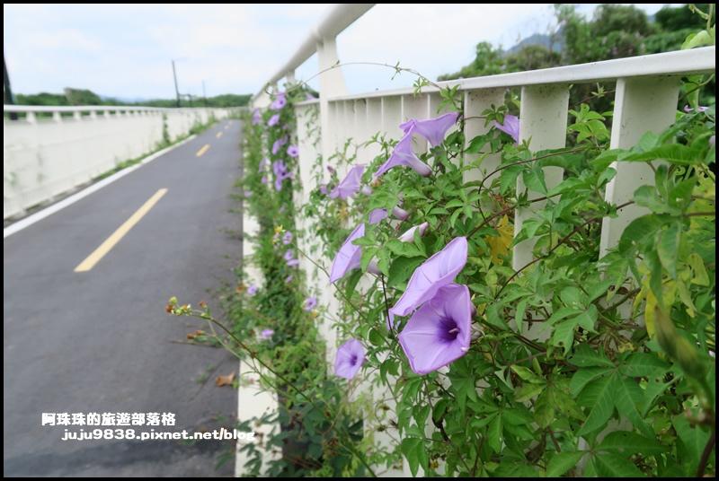大溪韭菜58.JPG