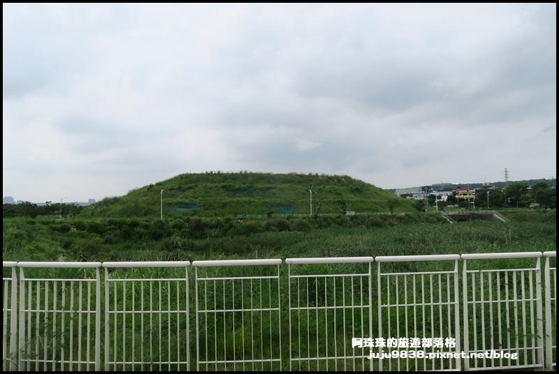 大溪韭菜53.JPG
