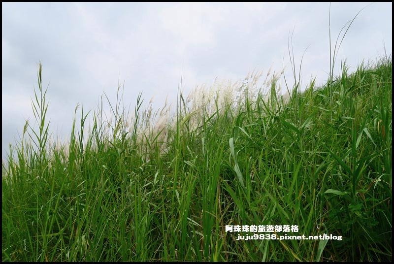 大溪韭菜59.JPG