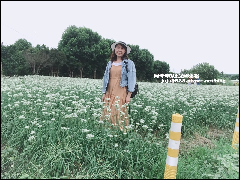 大溪韭菜花9.JPG