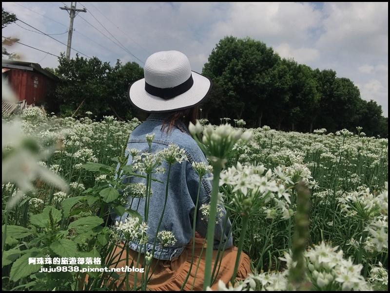 大溪韭菜花8.JPG