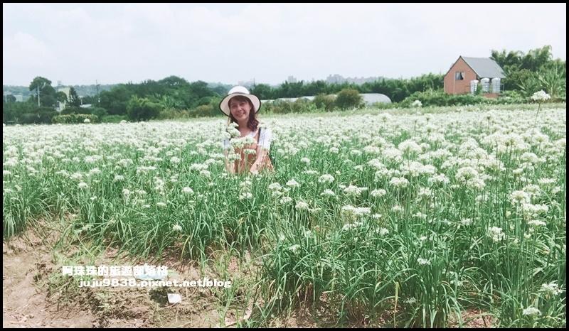 大溪韭菜花11.JPG