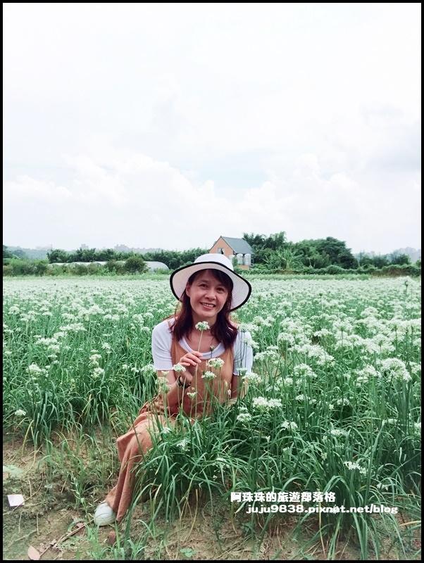 大溪韭菜花16.JPG