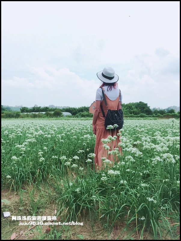 大溪韭菜花13.JPG